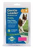 Premier Gentle Leader Quick Release Headcollar, Medium, Raspberry, My Pet Supplies