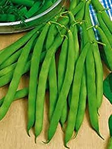 Seeds Green Bush Beans Zlatoglazka Organically Grown Russian Vegetable