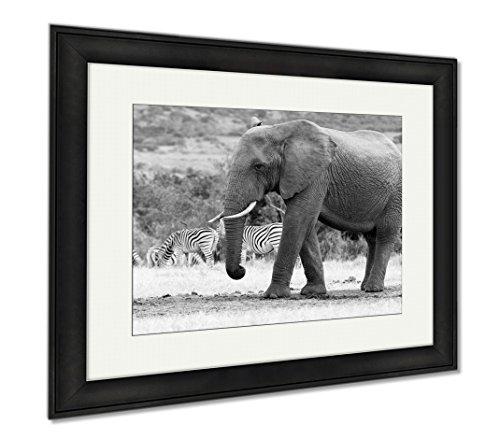 Ashley Framed Prints Im A Big African Bush Elephant, Wall Art Home Decoration, Black/White, 26x30 (frame size), Black Frame, AG5253526 Bush African Print