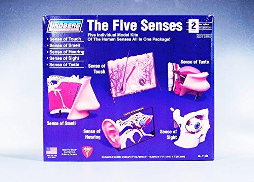Lindberg Human 5 Senses Anatomy Science Project Model Kit Brand New ...