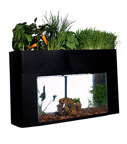 Buy betta fish tank with plant