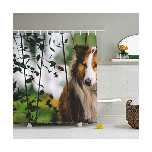 Abaysto Rough Collie Dogs Polyester Fabric Shower Curtain Sets with Hooks Waterproof Mildew Bathroom Decor Holiday Great Gift 1
