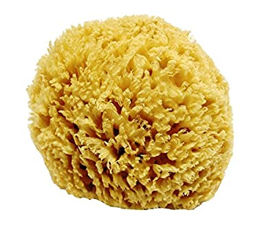 Unbleached Honeycomb Natural Sea Sponge - Strong and durable - suitable for both children and adults, for use in bathing, cleansing, exfoliating and applying cosmetics