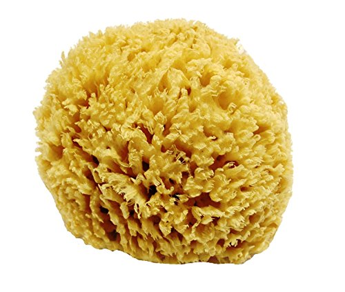 Unbleached Honeycomb Natural Sea Sponge product image