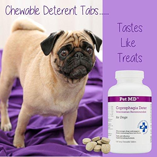 Best Dog Poop Deterrent