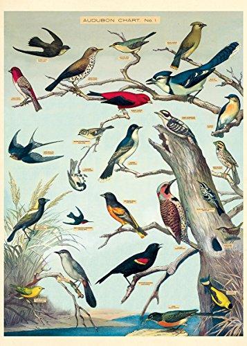 (Cavallini & Co. Audubon Birds Decorative Paper Sheet )