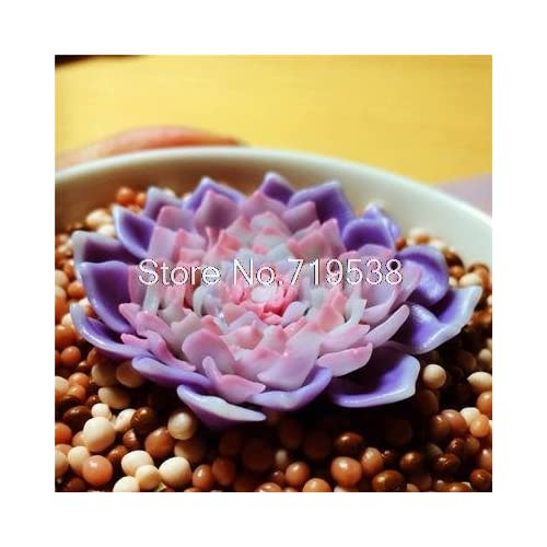 225 & 20seeds/bag Radiation potted flowers and sedum succulent meat ...