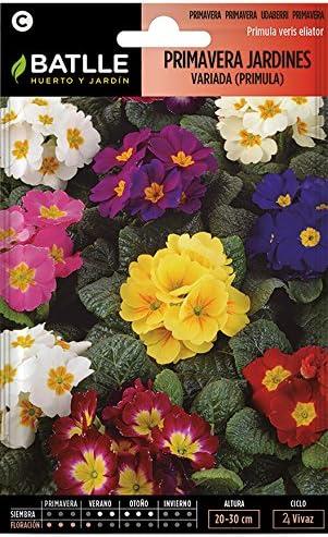Semillas de Flores - Primavera Jardines variada (Primula) - Batlle: Amazon.es: Jardín