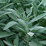 NON-GMO Organic White Sage Herb 25+ seed Perennial. this is the herb you grow to make the sacred sage that is bundled and burned as smudge to purify places and things.medicinal Greenlane Gardens Brans seeds are sold by Greenlane Gardens and Solar Tech Canada ONLY!