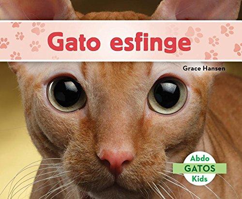 Gato Esfinge (Sphynx Cats) (Spanish Version) (Gatos/ Cats) (Spanish Edition): Grace Hansen: 9781532101991: Amazon.com: Books