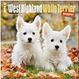 West Highland White Terrier Puppies Calendar (Multilingual Edition)