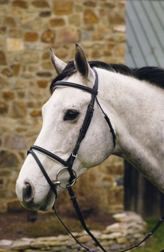 HDR Padded Dress Bridle/Flash Warmblood Blk/Wht