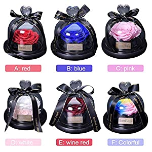 Preserved Rose Flower in Glass Dome Never Withered Handmade Fresh Upscale Immortal Flowers Eternity Rose Gift for Valentine's Day, Mother's Day, Christmas, Birthday, Anniversary - Rainbow 2