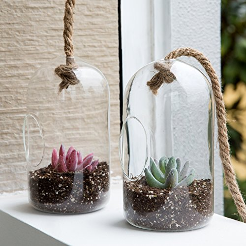 MyGift Set of 2 Clear Glass Cylindrical Succulent Plant Terrarium with Hanging Knot Rope