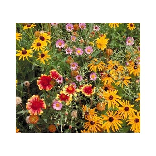 Outsidepride Perennial Wild Flower Seed Mix - 1 LB