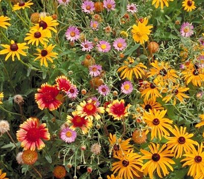 Non GMO Bulk All Perennial Wildflower Seed Mix (1 LB) 375,000 Seeds by Dirt Goddess Super Seeds (Image #5)