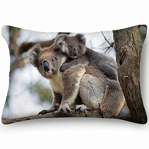 Australia Baby Koala Bear Mom Animals Wildlife Cotton Linen Blend Decorative Throw Pillow Cover Cushion Covers Pillowcase Pillow Shams, Home Decor Decorations for Sofa Couch Bed Chair 20X36 Inch (The Best Sofa Bed Australia)
