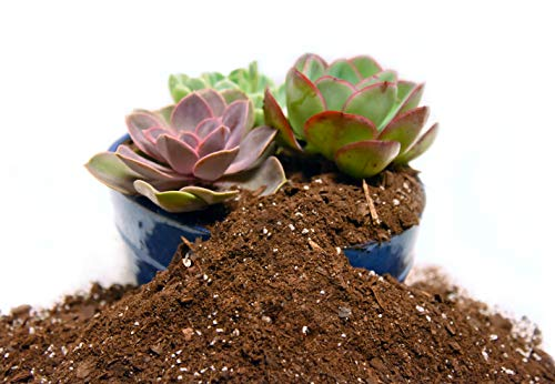 Organic Succulent & Cactus Soil Mix by Perfect Plants (4QTS)