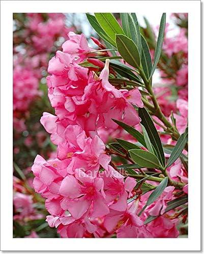 Amazon Com Barewalls Beautiful Pink Flowers Mediterranean