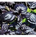 David's Garden Seeds Herb Basil Amethyst Improved NQ9468 (Purple) 200 Non-GMO, Open Pollinated Seeds
