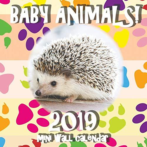Baby Animals! 2019 Mini Wall Calendar (Mini Wall Calendar Kids)