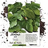 Seed Needs, Arugula Herb (Eruca sativa) 1,000 Seeds Non-GMO