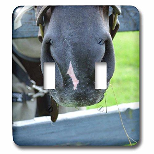 Horses Muzzle - 9