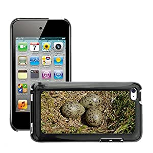 Hot Style Cell Phone PC Hard Case Cover // M00110678 Seagull Meeuwenei Egg Nest // Apple ipod Touch 4 4G 4th