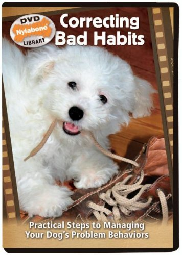 Correcting Bad Habits: Practical Steps to Managing Your Dog's Problem Behaviors