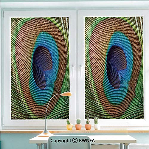 - RWNFA Removable Static Decorative Privacy Window Films Macro Size Peafowl Feather Plume Realistic Exotic Animal Themed Pattern for Glass (22.8In. by 35.4In),Blue Light Brown Green