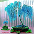 Sale 50pcs Rare Sky Blue Willow Seeds Chinese Perennial Flower Indoor Plants Seed Evergreen Bonsai Tree For Garden Decoration Multi-Colored
