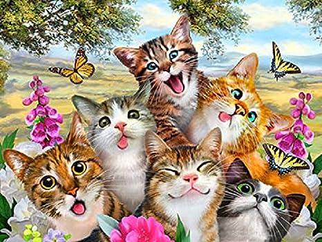 Cat selfie placa metálica para la pared placa regalo gatos Póster de imagen 15 x 20 cm Ginger, Negro y Blanco, Tabby: Amazon.es: Hogar