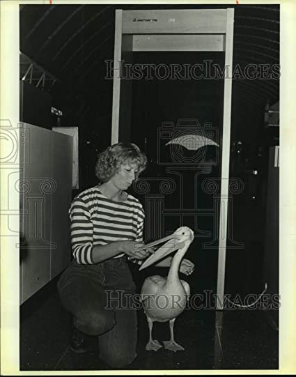 Amazon com: 1987 Press Photo Lynn Cuny and a pelican at the San