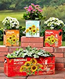 Vintage/Rustic Set of 4 Sunflower Planters or Bins Review
