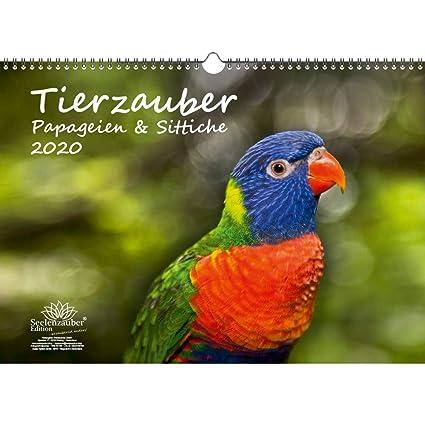 Calendario 2020, diseño de loros y periquitos de animales, tamaño ...