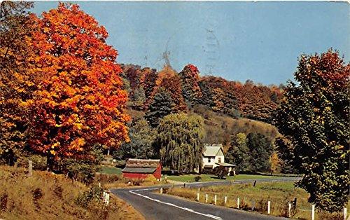 Harbor Drive (Snug Harbor Pleasing Drive Narrowsburg, New York, Postcard)