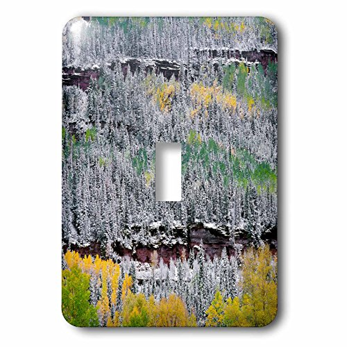 - 3dRose Danita Delimont - Trees - USA, Colorado, Uncompahgre Forest, San Juan Range, Fall snowstorm. - Light Switch Covers - single toggle switch (lsp_259105_1)