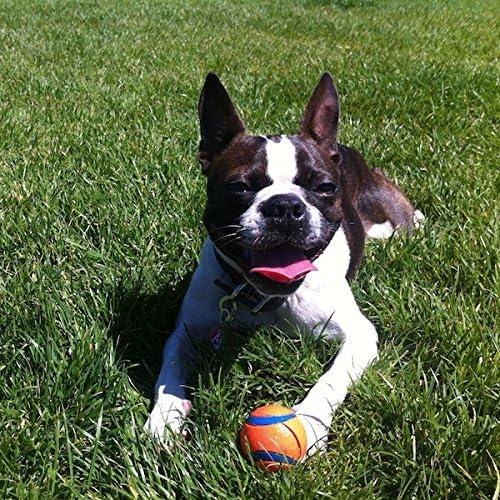 Chuckit Ultra Bola Pequeño 4,8 cm 2 por pack, Ultra perro y cachorro Juguete: Amazon.es: Productos para mascotas
