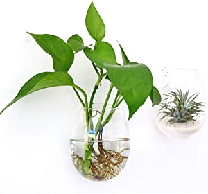 Ivolador Wall Hanging Propagation Glass Plant Terrarium Container Egg Shape Perfect for Propagating Hydroponic Plants Home Office Garden Decor Wedding - 2PCS