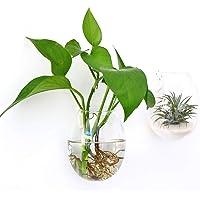 Ivolador 2PCS Wall Hanging Glass Plant Terrarium Container Egg Shape Perfect for Home Office Garden Decor Wedding