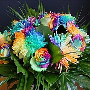 50 Rainbow Chrysanthemum Flower Seeds rare color new arrival DIY Home Garden flower plant