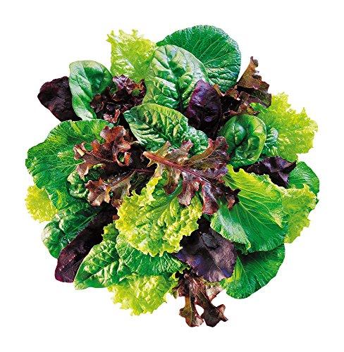 Burpee Sweet Salad Mix Mesclun Seeds 750 seeds