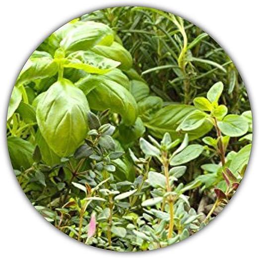 Semillas mixtas italianas de 6 hierbas aromáticas (orégano ...