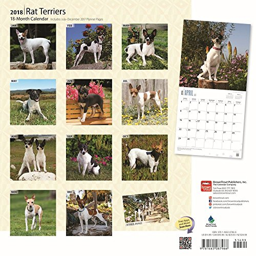 Rat Terriers 2018 Wall Calendar Photo #3
