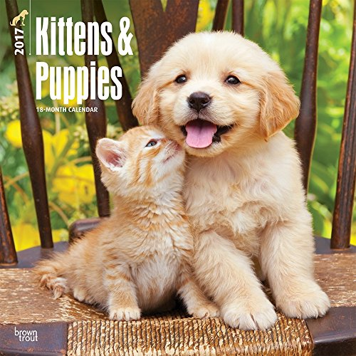 Kittens & Puppies 2017 Wall Calendar 12