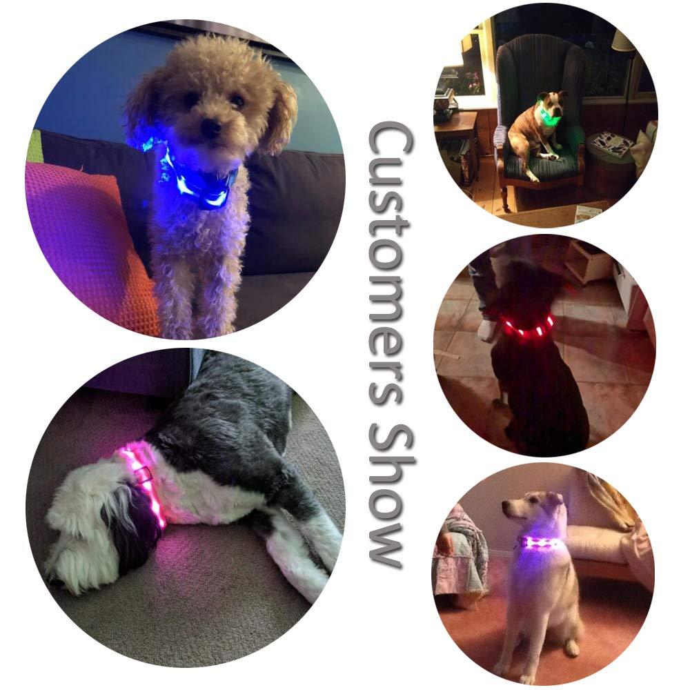 Resistente al Agua MASBRILL Cuello de Seguridad LED s/úper Brillante DC Recargable para Perros excelente Visibilidad y Seguridad , Naranja 60X2.5cm L