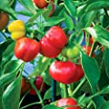 Pimento Sweet Pepper Seeds Non-GMO (variety size available)