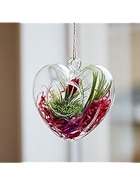 Amazon.com: Fresh Flowers & Live Indoor Plants: Grocery