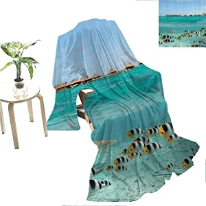 "Flyerer Ocean Decor Collection Super Plush Blanket  Blacktip Reef Shark Chasing Butterfly Fish in Shallow Clear Water Lagoon of Bora Bora an Island Picture Super Soft Warm Blanket   50""x30"""