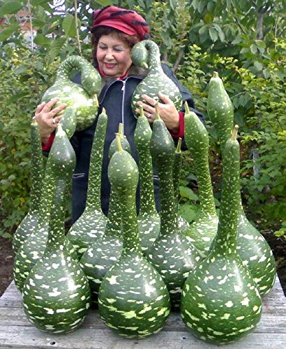 - Rare Organic Vegetable gourds Seeds
